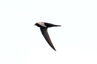 swift-unknown-IMG_2788-xx