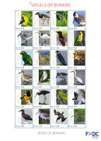 Bird Stamps for Bonaire Island